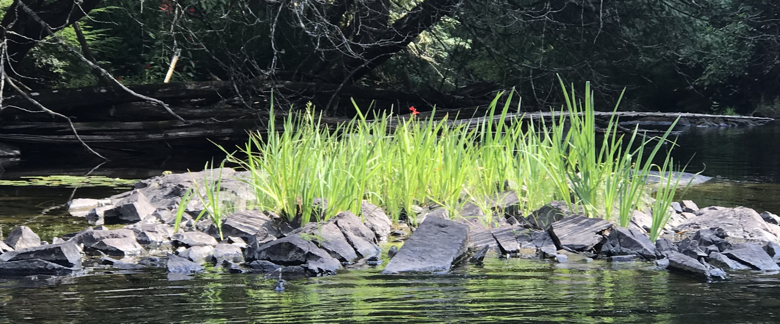 Bright green grass growing within rough rocks on a river